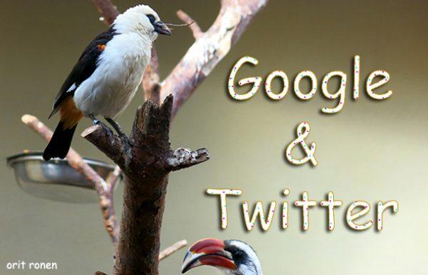 הציפורים מגיעות לאינדקס של גוגל Twitter&Google